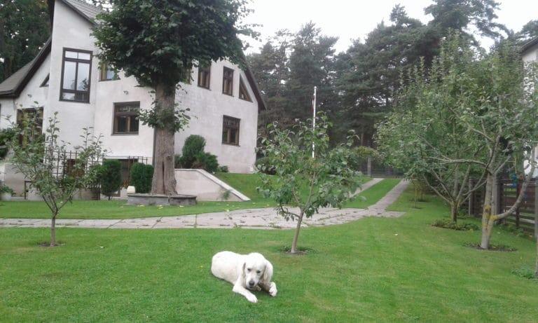 Dzīvnieku viesnīca pie Esteres, Babītē