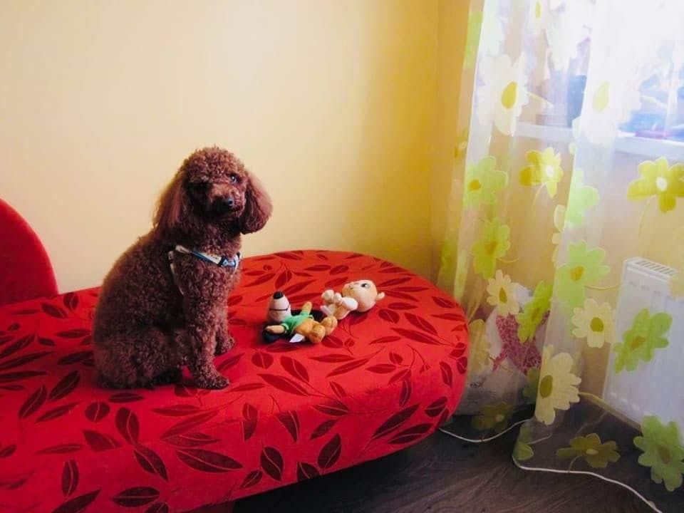 Dzīvnieku viesnīca pie Kristīnes Lejas, Imantā