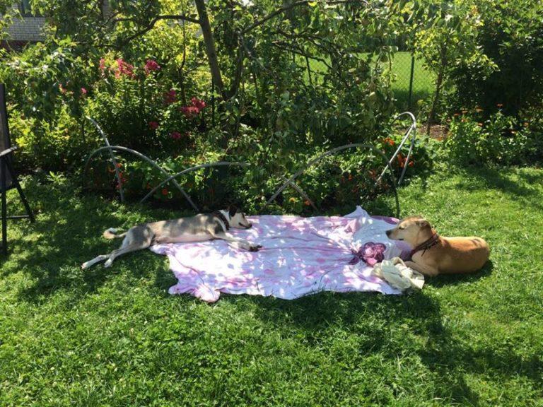Dzīvnieku viesnīca pie Kristīnes Lejas, Carnikavā