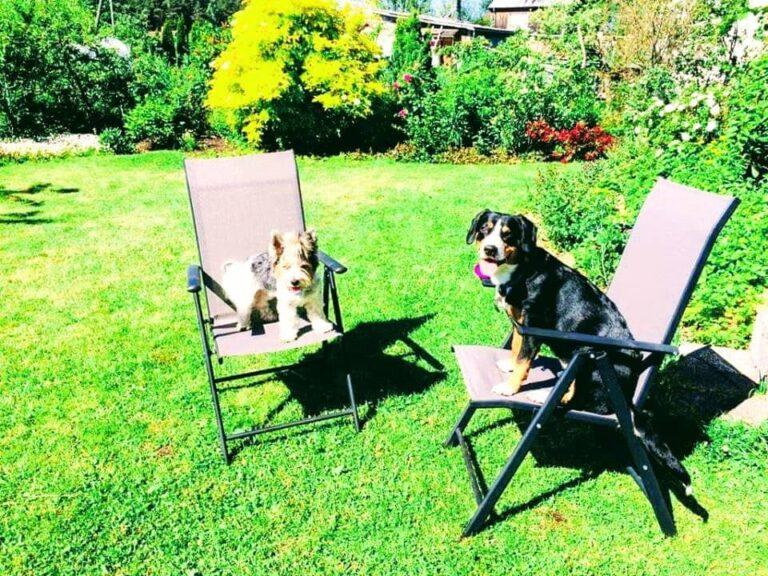 Suņu un kaķu viesnīca 4paws. Dzīvnieku viesnīca. Suņu un kaķu pieskatīšana